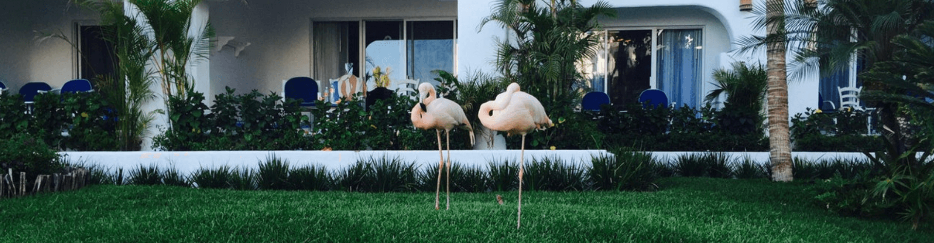 backyard trends 2019