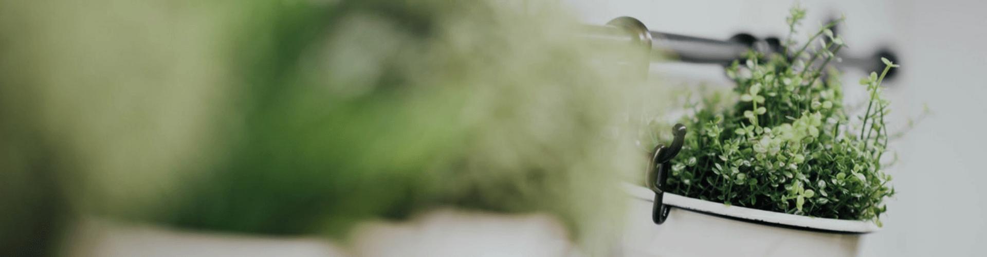 reasons your herb garden failed