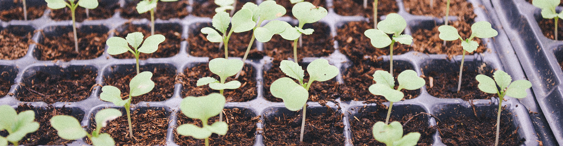 Gardening Seeds Plants
