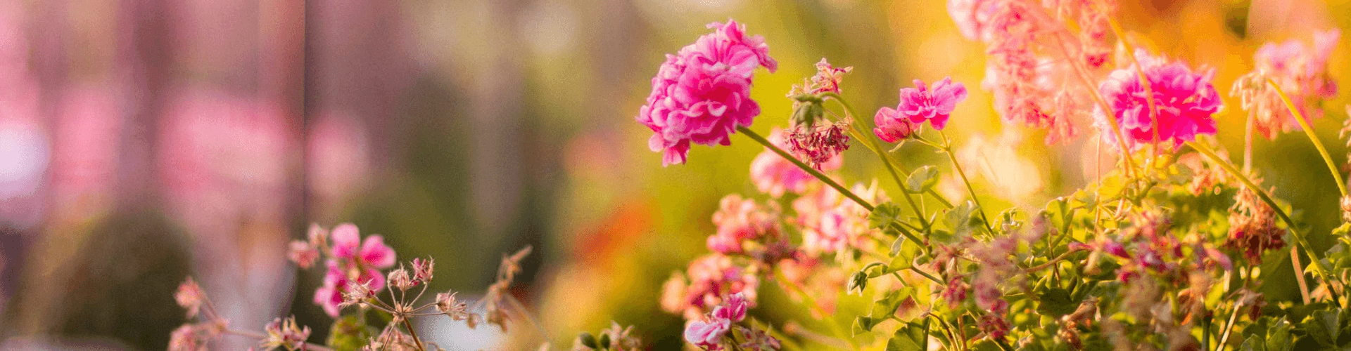 gardening tips to increase property value