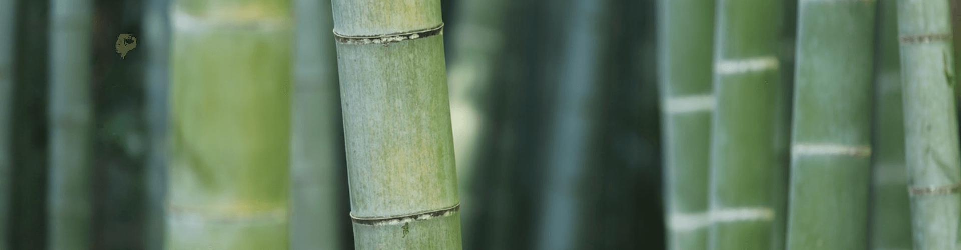 6 tips to create a Balinese inspired garden