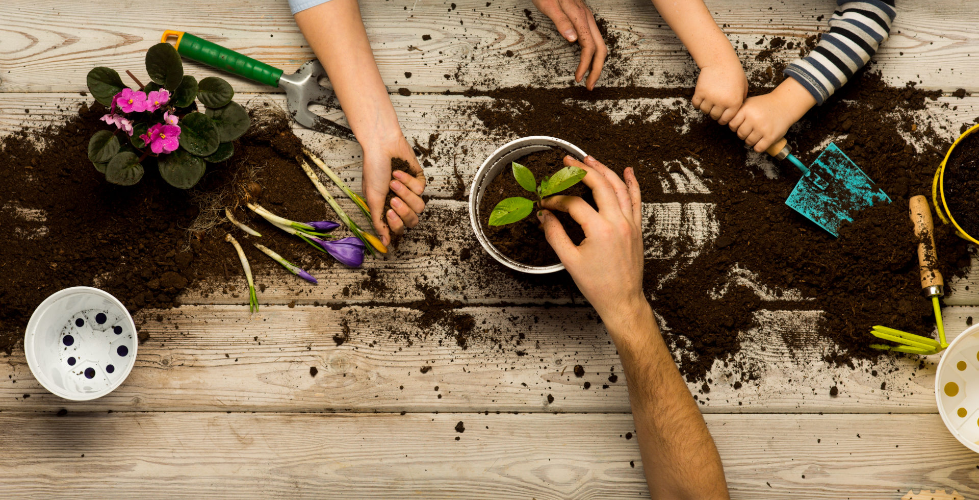 how to build a sustainable garden