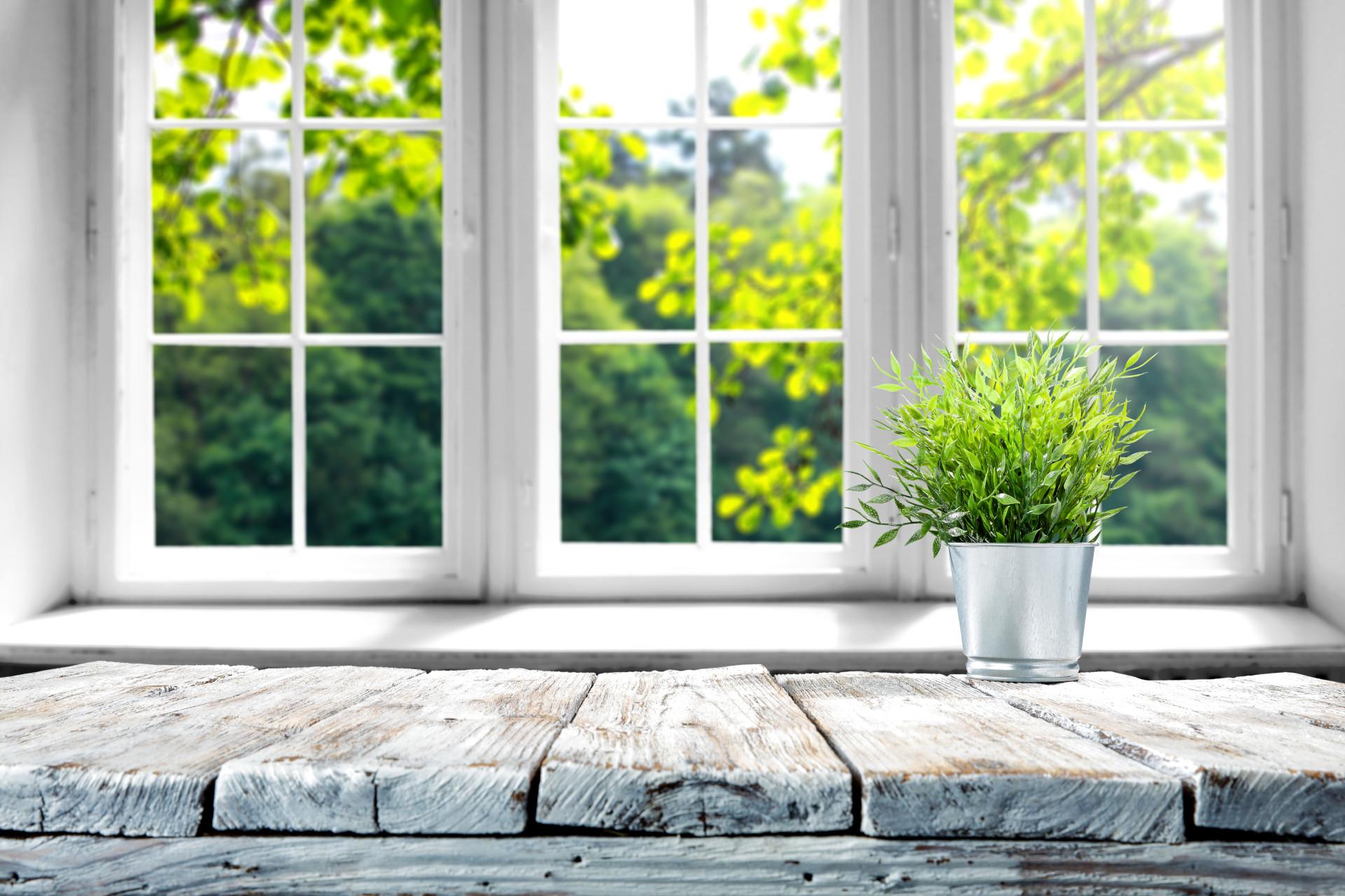 plant on the balcony